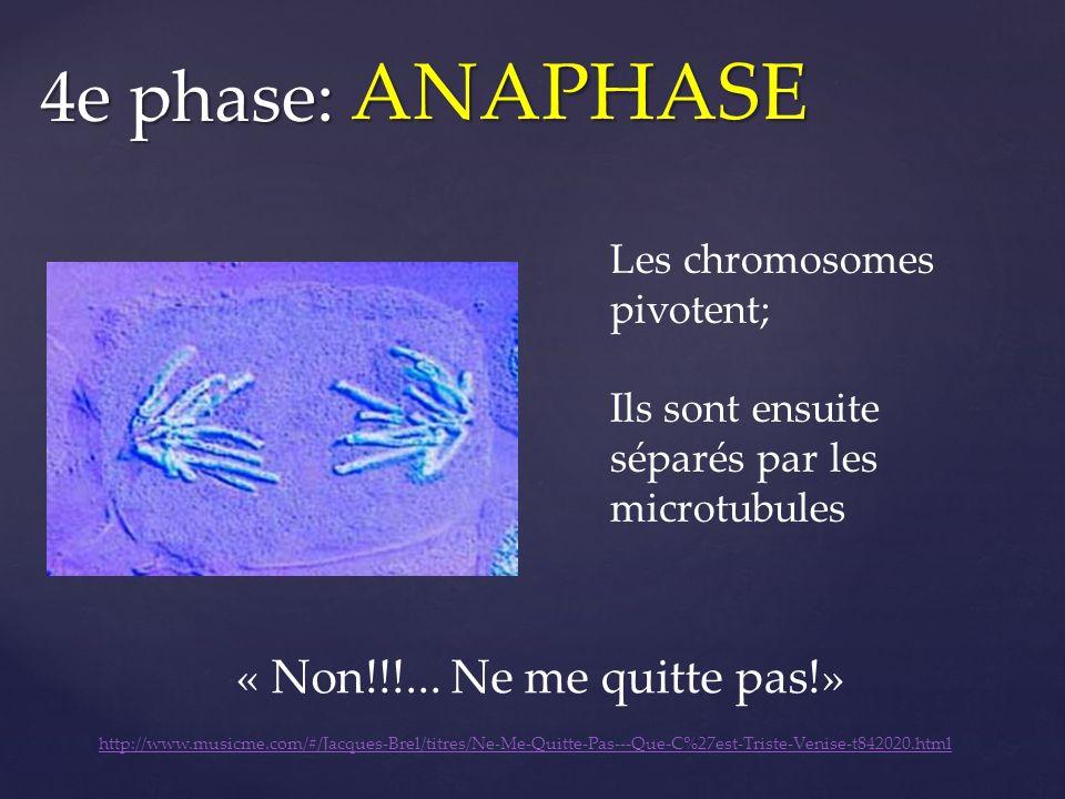 « Non!!!... Ne me quitte pas!» Les chromosomes pivotent; Ils sont ensuite séparés par les microtubules 4e phase: ANAPHASE http://www.musicme.com/#/Jac