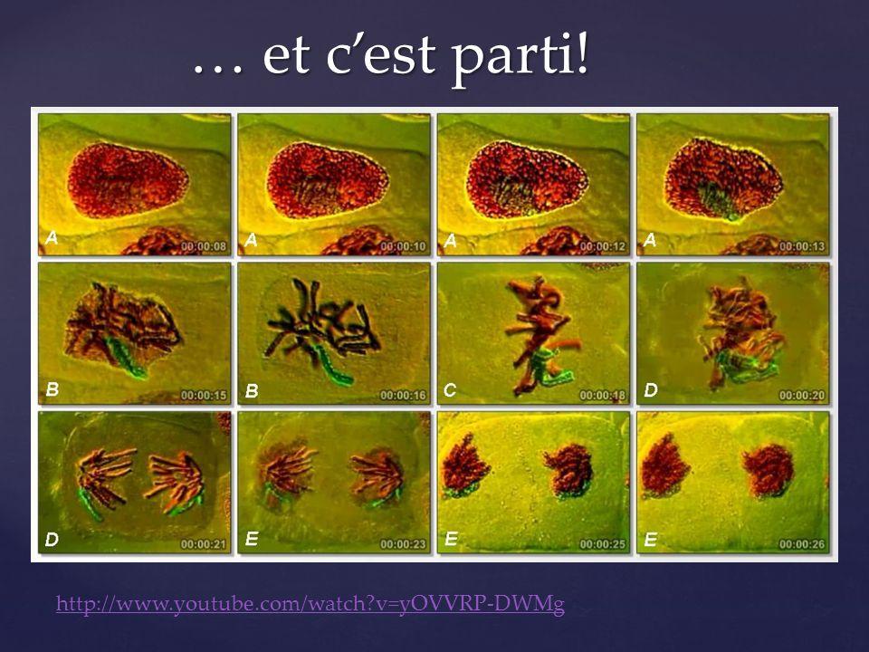 1 e phase ???: INTERPHASE « Quand même, toute seul, la vie continue…» La cellule grandit.