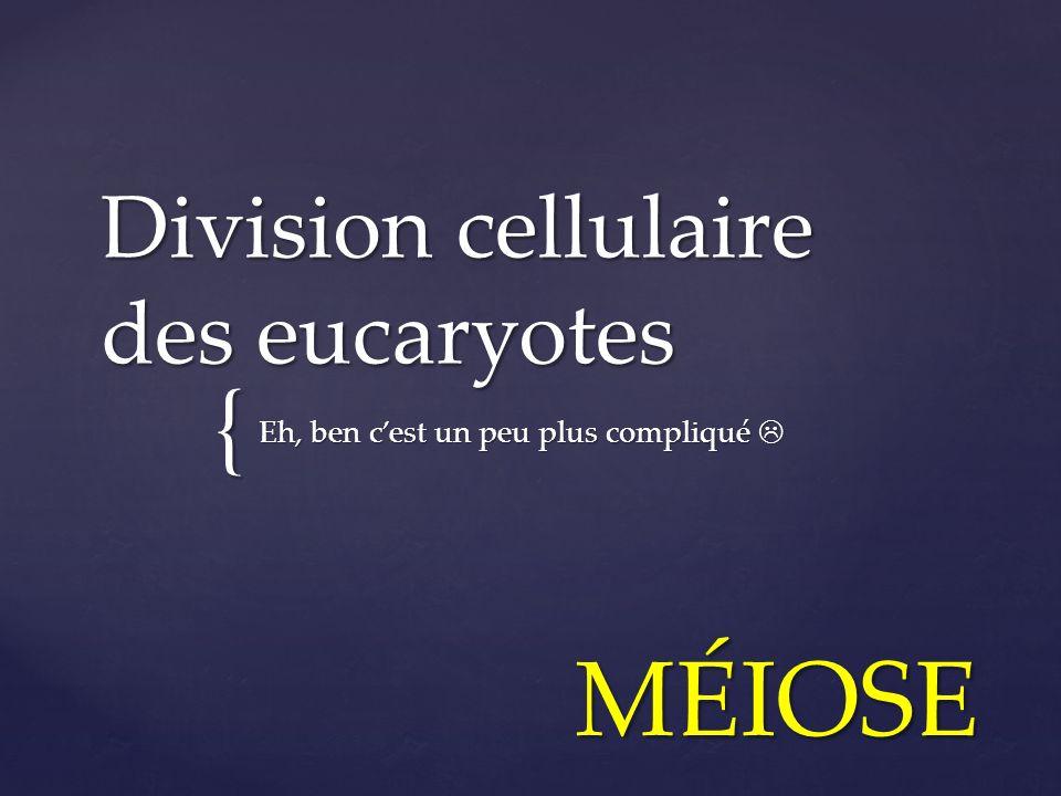 { Division cellulaire des eucaryotes Eh, ben cest un peu plus compliqué Eh, ben cest un peu plus compliqué MÉIOSE