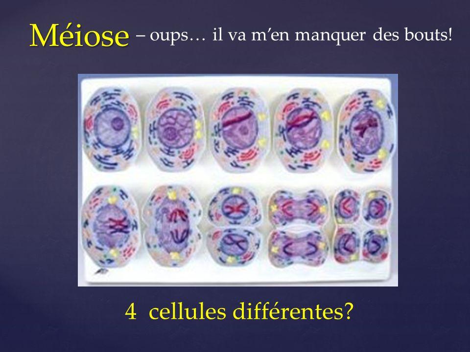 Méiose 4 cellules différentes? – oups… il va men manquer des bouts!