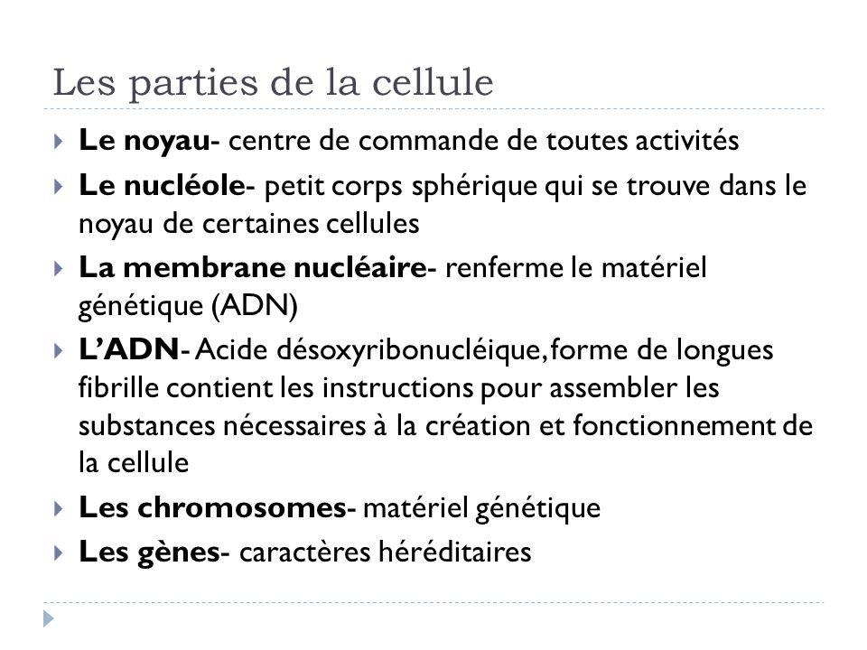 Les parties de la cellule Le noyau- centre de commande de toutes activités Le nucléole- petit corps sphérique qui se trouve dans le noyau de certaines