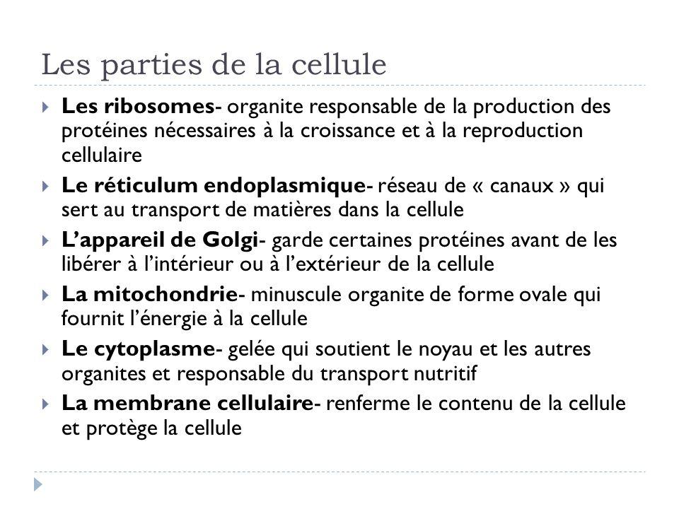 Les parties de la cellule Les ribosomes- organite responsable de la production des protéines nécessaires à la croissance et à la reproduction cellulai