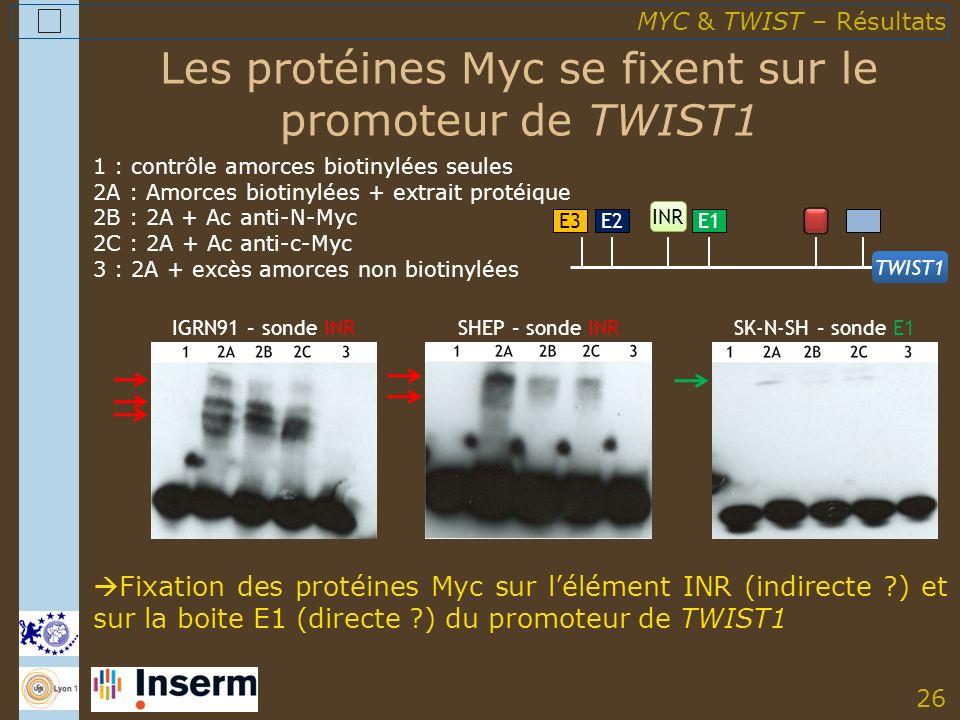 26 Les protéines Myc se fixent sur le promoteur de TWIST1 Fixation des protéines Myc sur lélément INR (indirecte ) et sur la boite E1 (directe ) du promoteur de TWIST1 E3E2E1 INR TWIST1 IGRN91 – sonde INRSHEP – sonde INRSK-N-SH – sonde E1 MYC & TWIST – Résultats 1 : contrôle amorces biotinylées seules 2A : Amorces biotinylées + extrait protéique 2B : 2A + Ac anti-N-Myc 2C : 2A + Ac anti-c-Myc 3 : 2A + excès amorces non biotinylées