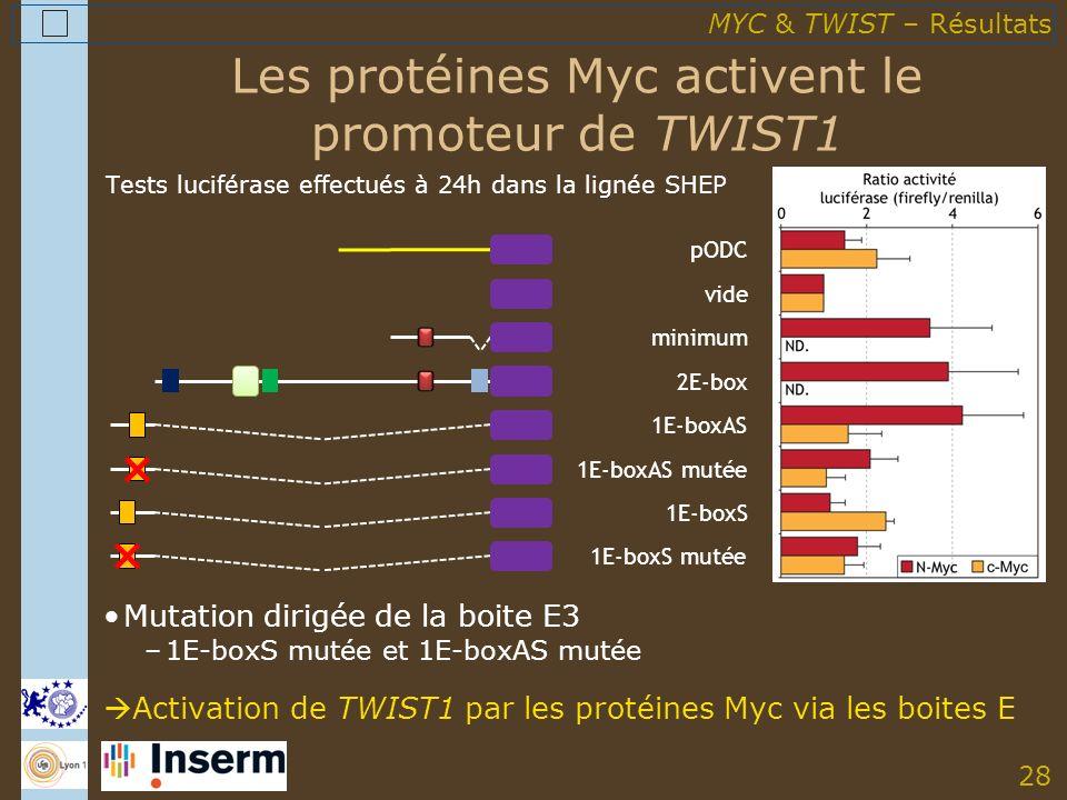 28 Les protéines Myc activent le promoteur de TWIST1 Mutation dirigée de la boite E3 –1E-boxS mutée et 1E-boxAS mutée Activation de TWIST1 par les protéines Myc via les boites E MYC & TWIST – Résultats Tests luciférase effectués à 24h dans la lignée SHEP minimum 1E-boxAS vide pODC 1E-boxAS mutée 1E-boxS mutée 2E-box 1E-boxS