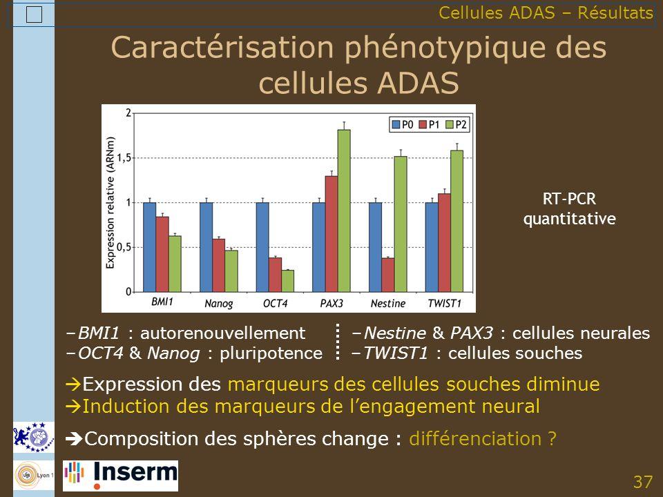 37 Caractérisation phénotypique des cellules ADAS Composition des sphères change : différenciation .
