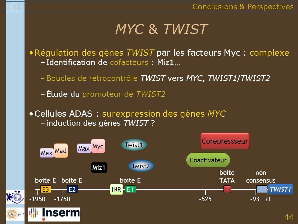 44 MYC & TWIST Conclusions & Perspectives Régulation des gènes TWIST par les facteurs Myc : complexe –Identification de cofacteurs : Miz1… –Boucles de rétrocontrôle TWIST vers MYC, TWIST1/TWIST2 –Étude du promoteur de TWIST2 Cellules ADAS : surexpression des gènes MYC –induction des gènes TWIST .
