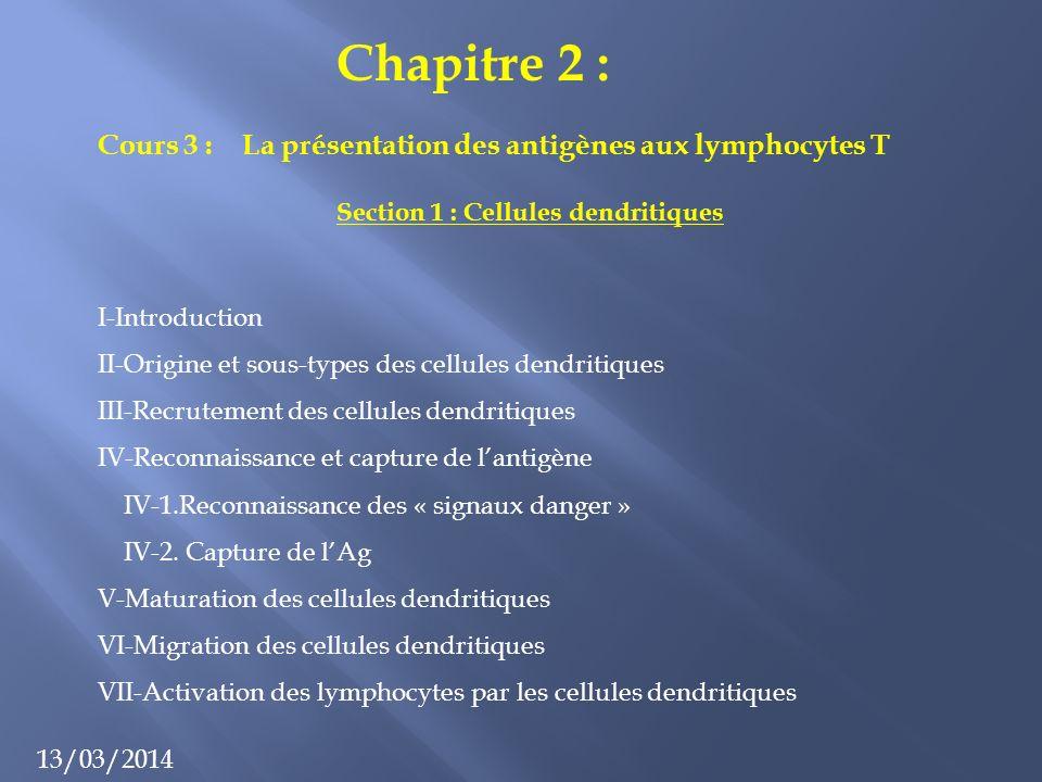 Chapitre 2 : 13/03/2014 Cours 3 : La présentation des antigènes aux lymphocytes T Section 1 : Cellules dendritiques I-Introduction II-Origine et sous-