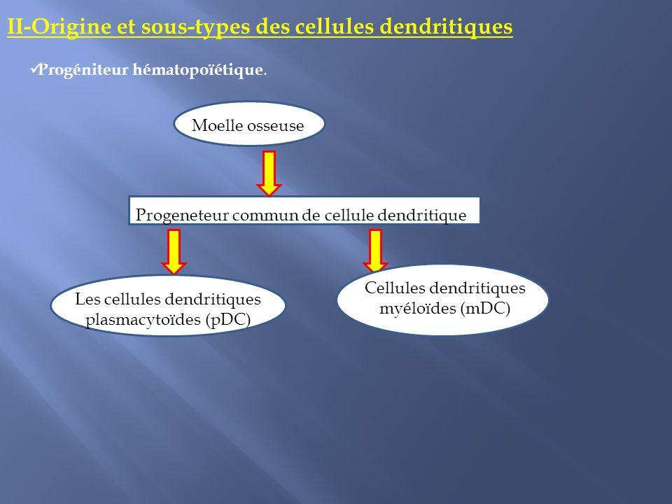 II-Origine et sous-types des cellules dendritiques Progéniteur hématopoïétique. Moelle osseuse Progeneteur commun de cellule dendritique Cellules dend