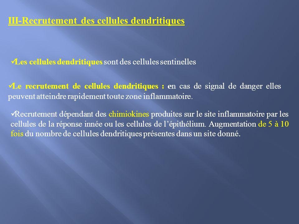 III-Recrutement des cellules dendritiques Recrutement dépendant des chimiokines produites sur le site inflammatoire par les cellules de la réponse inn