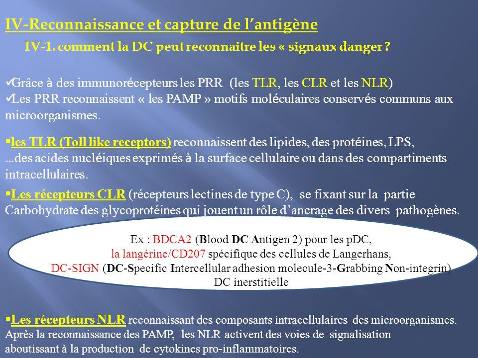 Grâce à des immunor é cepteurs les PRR (les TLR, les CLR et les NLR) Les PRR reconnaissent « les PAMP » motifs mol é culaires conserv é s communs aux