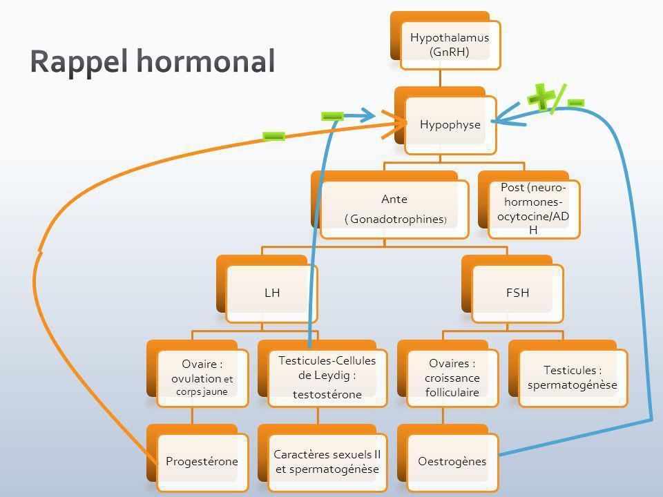 Hypothalamus (GnRH) Hypophyse Ante ( Gonadotrophines ) LH Ovaire : ovulation et corps jaune Progestérone Testicules-Cellules de Leydig : testostérone Caractères sexuels II et spermatogénèse FSH Ovaires : croissance folliculaire Oestrogènes Testicules : spermatogénèse Post (neuro- hormones- ocytocine/AD H
