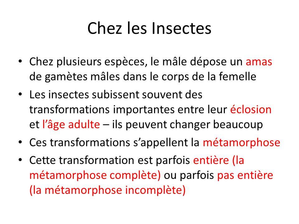 Chez les Insectes Chez plusieurs espèces, le mâle dépose un amas de gamètes mâles dans le corps de la femelle Les insectes subissent souvent des trans