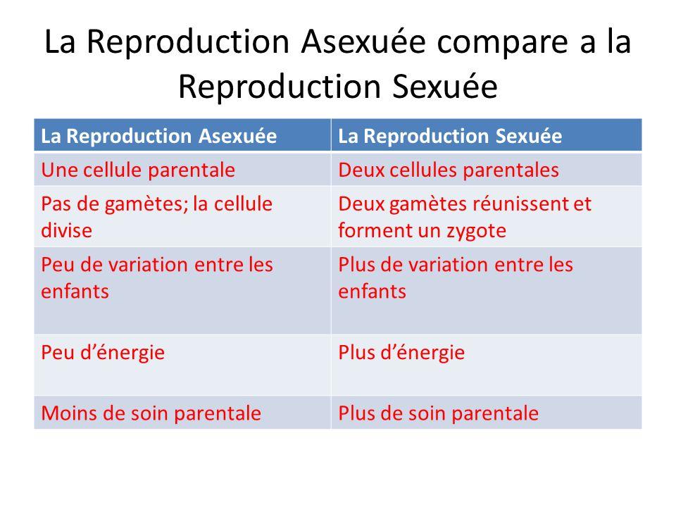 La Reproduction Asexuée compare a la Reproduction Sexuée La Reproduction AsexuéeLa Reproduction Sexuée Une cellule parentaleDeux cellules parentales P