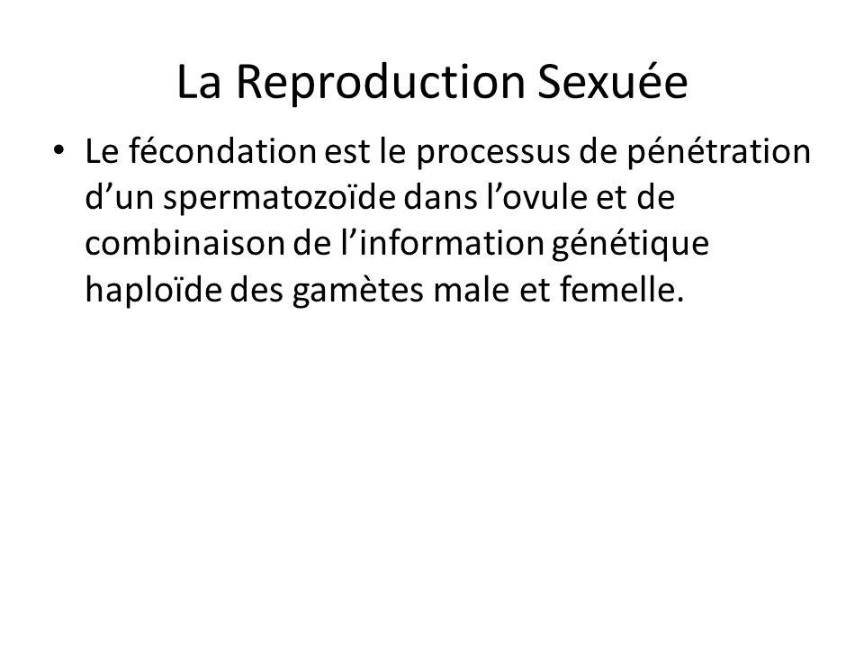 Chez les Mousses et les Fougères La fécondation est externe Leau permet les gamètes mâles et femelles de se rencontrer Utilisent la reproduction sexuée et la reproduction asexuée
