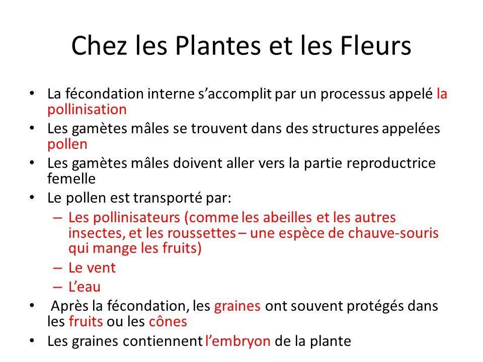 Chez les Plantes et les Fleurs La fécondation interne saccomplit par un processus appelé la pollinisation Les gamètes mâles se trouvent dans des struc