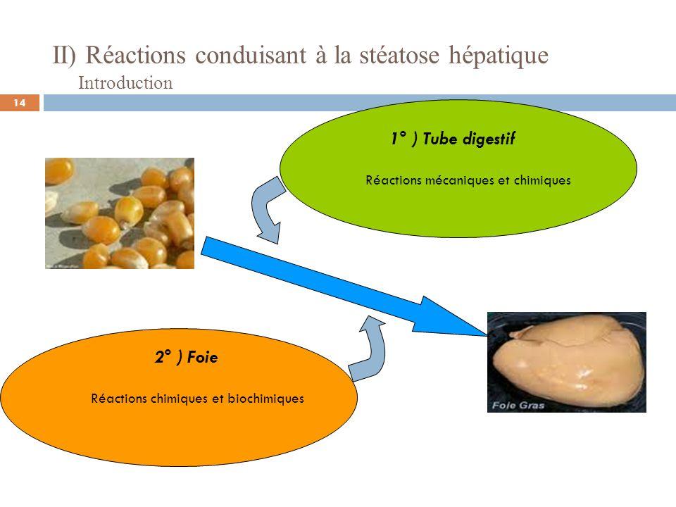 II) Réactions conduisant à la stéatose hépatique Introduction 1° ) Tube digestif Réactions mécaniques et chimiques 2° ) Foie Réactions chimiques et bi