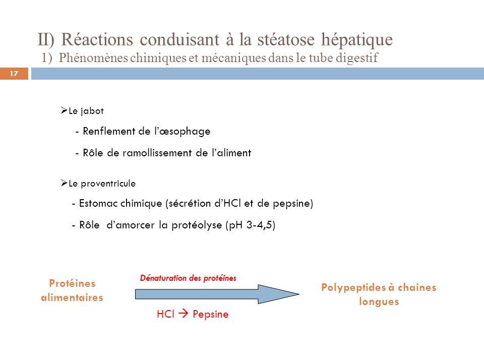 II) Réactions conduisant à la stéatose hépatique 1) Phénomènes chimiques et mécaniques dans le tube digestif Le jabot - Renflement de lœsophage - Rôle