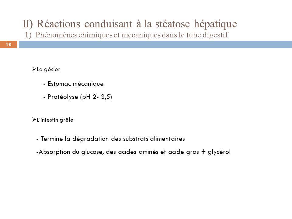II) Réactions conduisant à la stéatose hépatique 1) Phénomènes chimiques et mécaniques dans le tube digestif Le gésier - Estomac mécanique - Protéolys