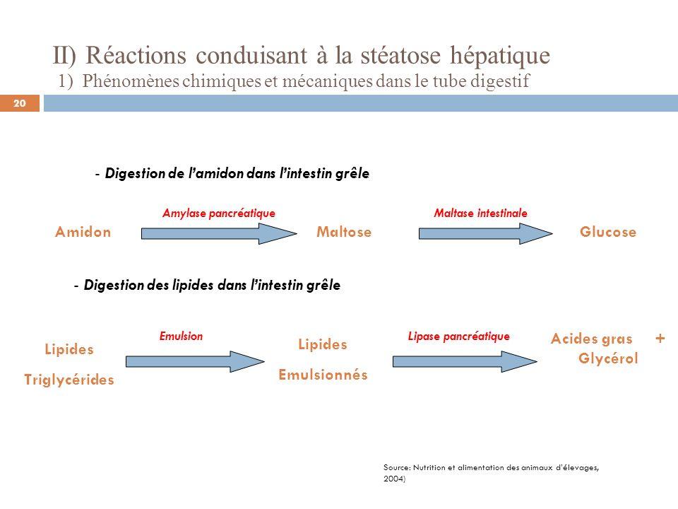 II) Réactions conduisant à la stéatose hépatique 1) Phénomènes chimiques et mécaniques dans le tube digestif - Digestion de lamidon dans lintestin grê