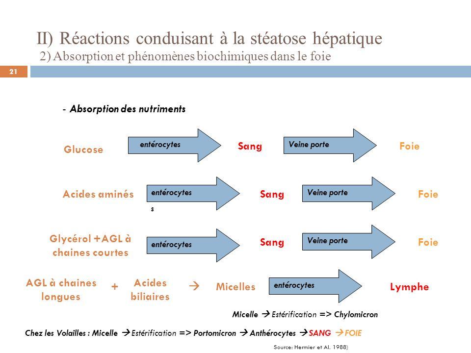 II) Réactions conduisant à la stéatose hépatique 2) Absorption et phénomènes biochimiques dans le foie - Absorption des nutriments Glucose Acides amin
