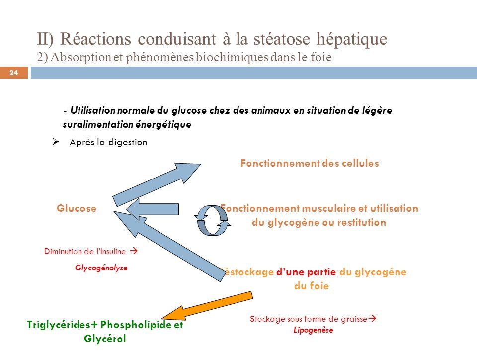 II) Réactions conduisant à la stéatose hépatique 2) Absorption et phénomènes biochimiques dans le foie - Utilisation normale du glucose chez des anima