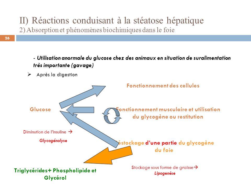 II) Réactions conduisant à la stéatose hépatique 2) Absorption et phénomènes biochimiques dans le foie - Utilisation anormale du glucose chez des anim