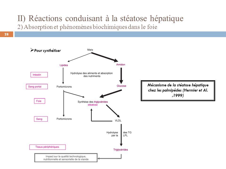 II) Réactions conduisant à la stéatose hépatique 2) Absorption et phénomènes biochimiques dans le foie Pour synthétiser Mécanisme de la stéatose hépat