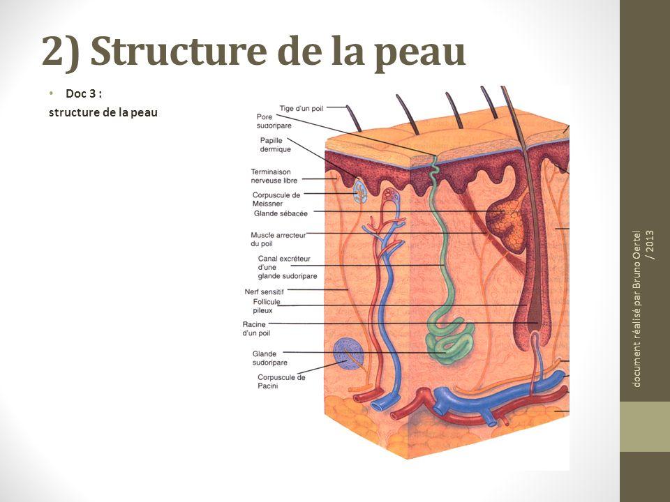 2) Structure de la peau Doc 3 : structure de la peau document réalisé par Bruno Oertel / 2013