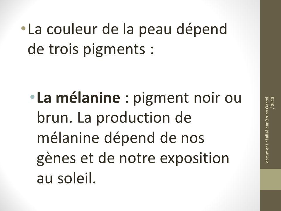 La couleur de la peau dépend de trois pigments : La mélanine : pigment noir ou brun. La production de mélanine dépend de nos gènes et de notre exposit