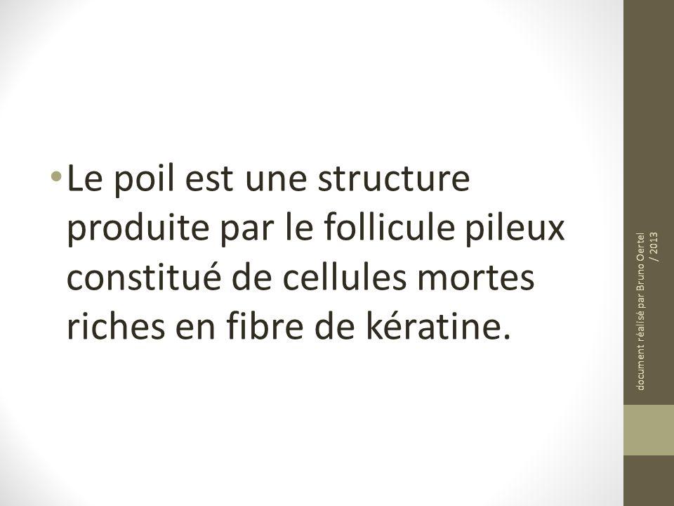 Le poil est une structure produite par le follicule pileux constitué de cellules mortes riches en fibre de kératine. document réalisé par Bruno Oertel