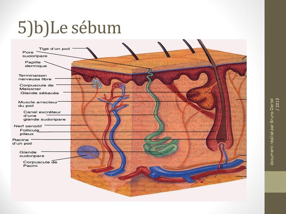 5)b)Le sébum Cest un liquide composé de matières grasses (lipides) produit par les glandes sébacées (voir doc 3) document réalisé par Bruno Oertel / 2