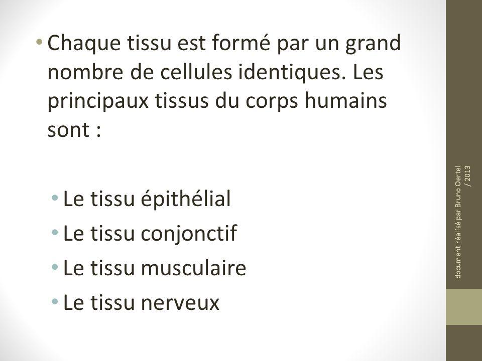 Chaque tissu est formé par un grand nombre de cellules identiques. Les principaux tissus du corps humains sont : Le tissu épithélial Le tissu conjonct