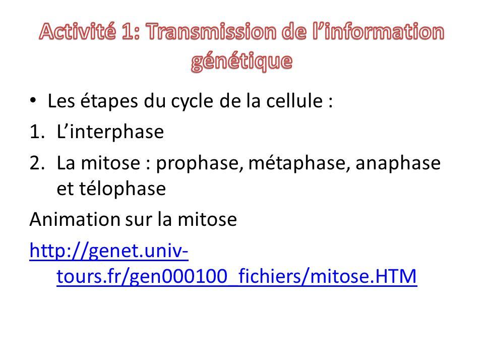Les étapes du cycle de la cellule : 1.Linterphase 2.La mitose : prophase, métaphase, anaphase et télophase Animation sur la mitose http://genet.univ-