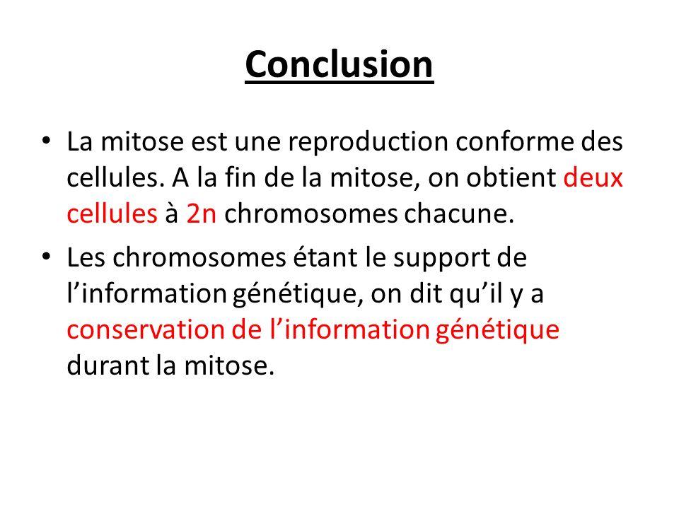 Conclusion La mitose est une reproduction conforme des cellules. A la fin de la mitose, on obtient deux cellules à 2n chromosomes chacune. Les chromos