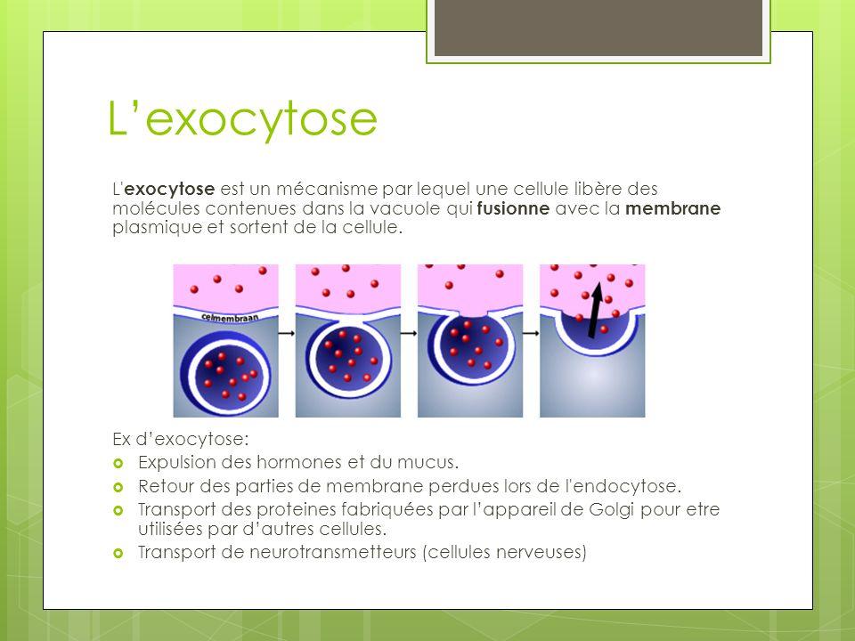 Conclusion Animation endocytose / exocytose: http://www.youtube.com/watch?v=K7yku3 sa4Y8