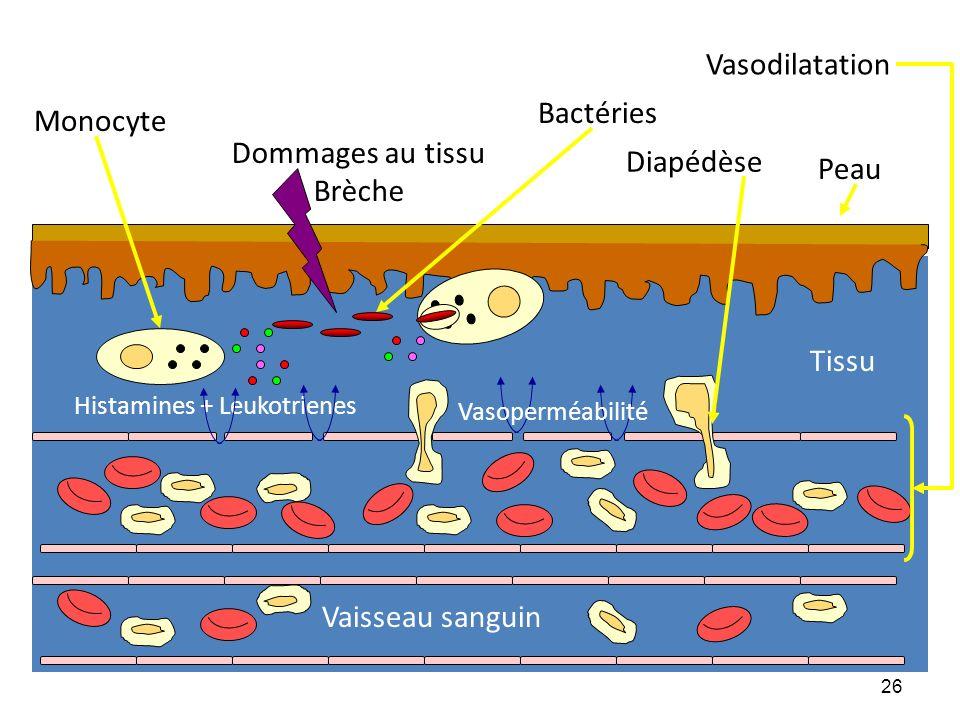Vaisseau sanguin Tissu Peau Diapédèse Dommages au tissu Brèche Bactéries Vasodilatation Monocyte Histamines + Leukotrienes Vasoperméabilité 26