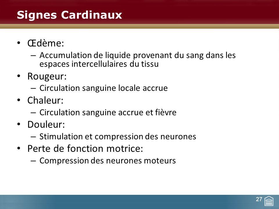 Signes Cardinaux Œdème: – Accumulation de liquide provenant du sang dans les espaces intercellulaires du tissu Rougeur: – Circulation sanguine locale