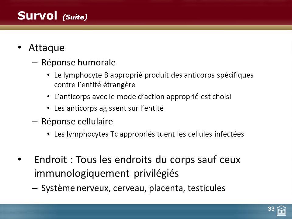 Survol (Suite) Attaque – Réponse humorale Le lymphocyte B approprié produit des anticorps spécifiques contre lentité étrangère Lanticorps avec le mode