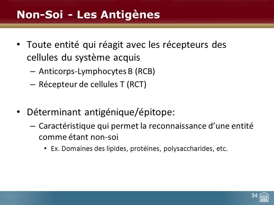 Non-Soi - Les Antigènes Toute entité qui réagit avec les récepteurs des cellules du système acquis – Anticorps-Lymphocytes B (RCB) – Récepteur de cell