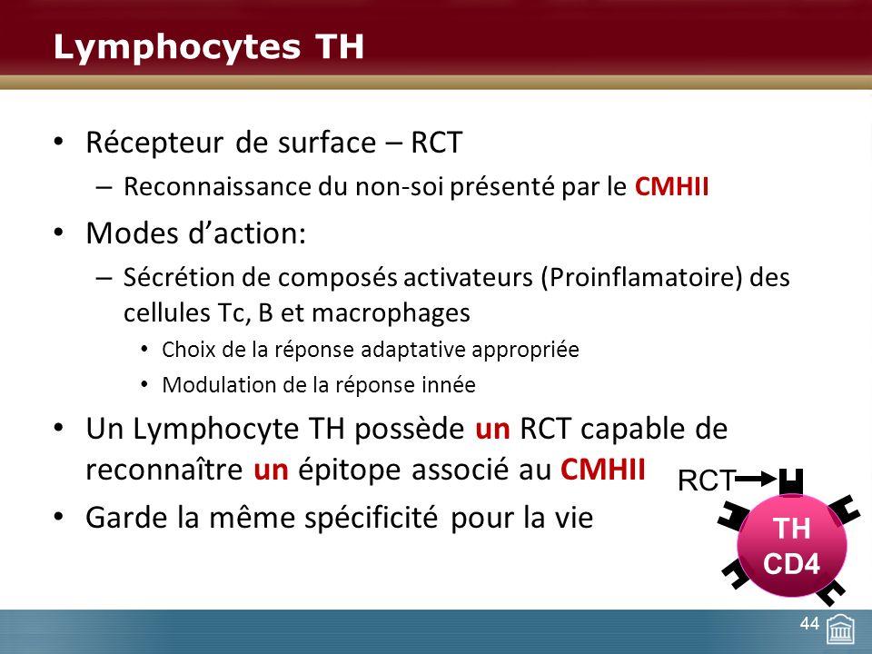 Lymphocytes TH Récepteur de surface – RCT – Reconnaissance du non-soi présenté par le CMHII Modes daction: – Sécrétion de composés activateurs (Proinf