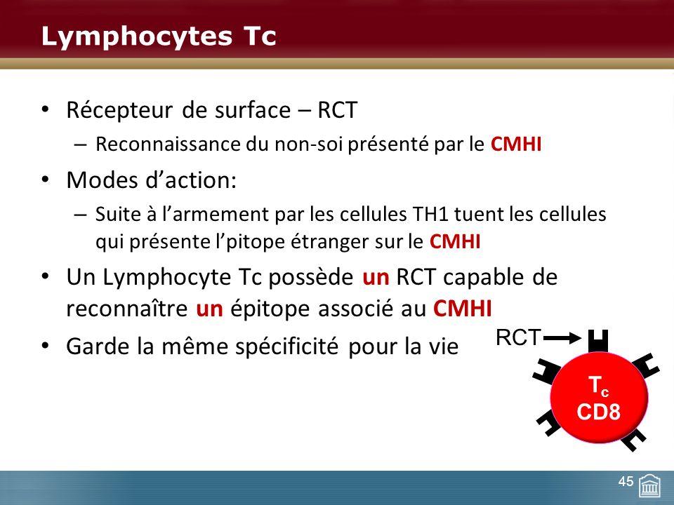 Lymphocytes Tc Récepteur de surface – RCT – Reconnaissance du non-soi présenté par le CMHI Modes daction: – Suite à larmement par les cellules TH1 tue