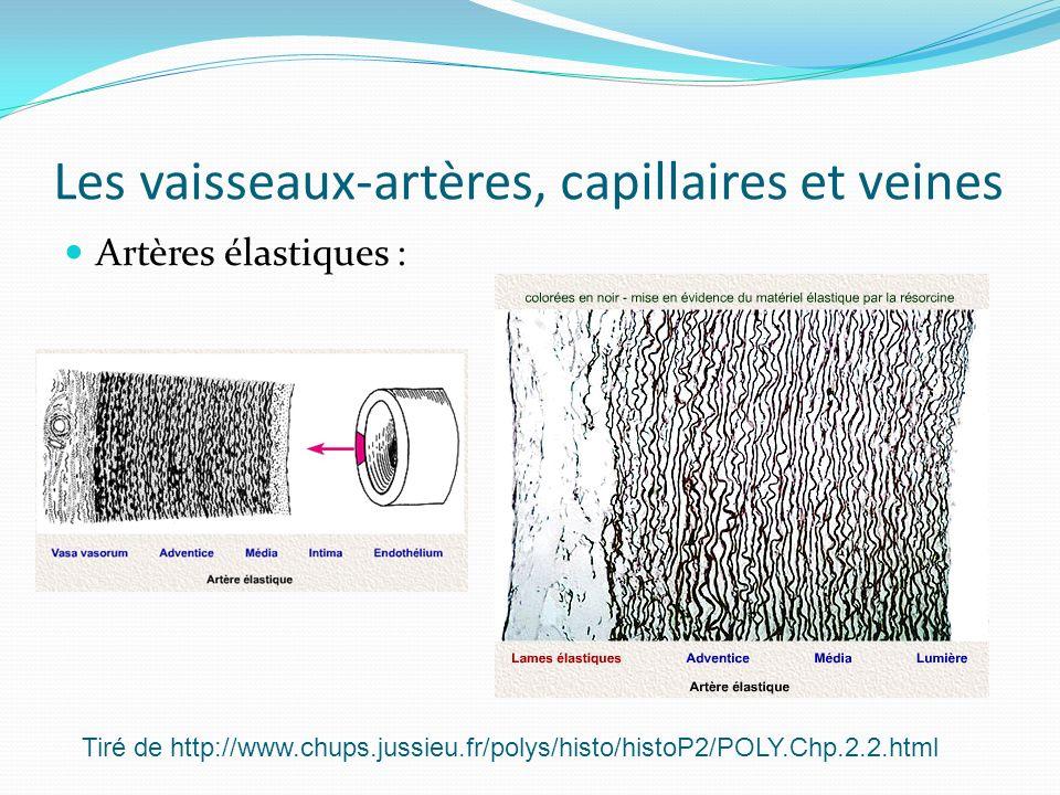 Les vaisseaux-artères, capillaires et veines Artères élastiques : Tiré de http://www.chups.jussieu.fr/polys/histo/histoP2/POLY.Chp.2.2.html