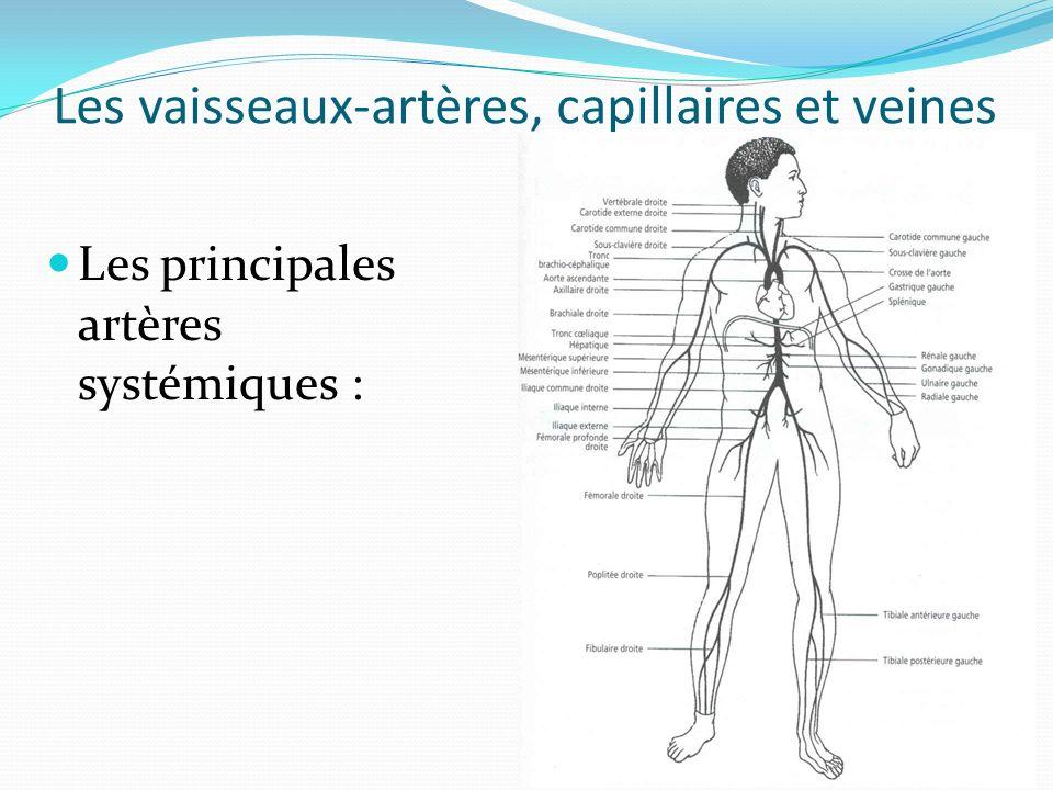 Les vaisseaux-artères, capillaires et veines Les principales artères systémiques :