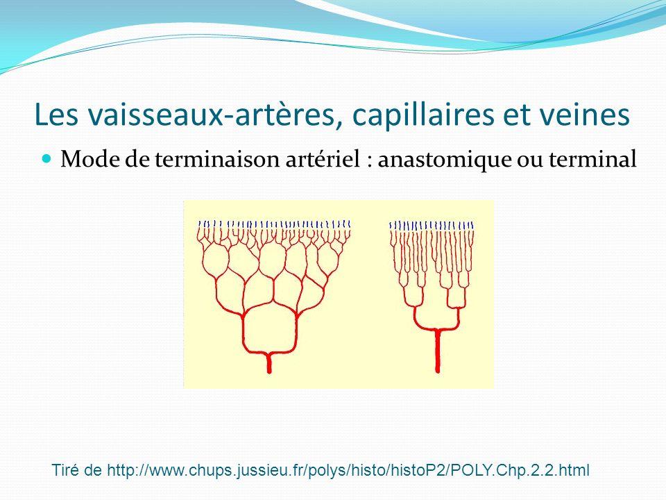 Les vaisseaux-artères, capillaires et veines Mode de terminaison artériel : anastomique ou terminal Tiré de http://www.chups.jussieu.fr/polys/histo/hi