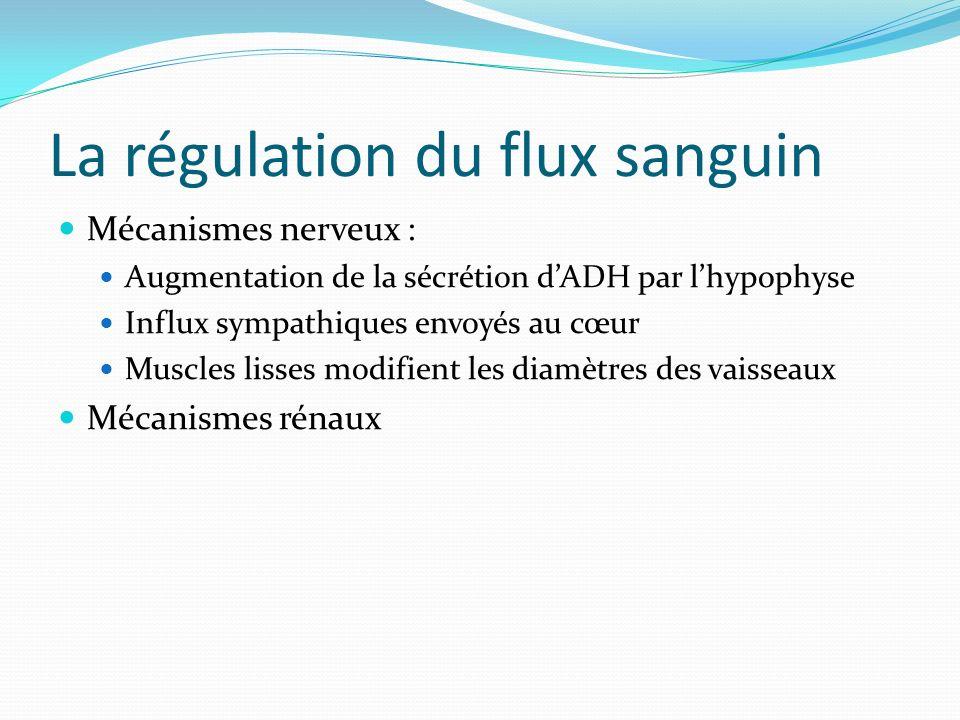 La régulation du flux sanguin Mécanismes nerveux : Augmentation de la sécrétion dADH par lhypophyse Influx sympathiques envoyés au cœur Muscles lisses