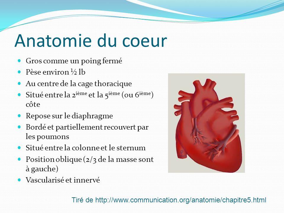 Anatomie du coeur Gros comme un poing fermé Pèse environ ½ lb Au centre de la cage thoracique Situé entre la 2 ième et la 5 ième (ou 6 ième ) côte Rep