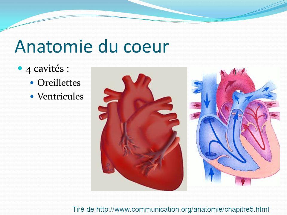 Anatomie du coeur 4 cavités : Oreillettes Ventricules Tiré de http://www.communication.org/anatomie/chapitre5.html