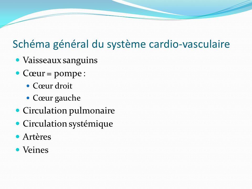 Schéma général du système cardio-vasculaire Vaisseaux sanguins Cœur = pompe : Cœur droit Cœur gauche Circulation pulmonaire Circulation systémique Art