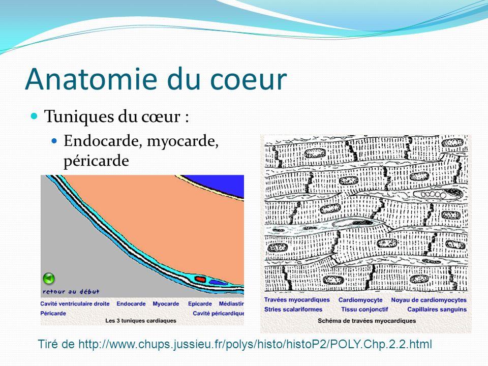 Anatomie du coeur Tuniques du cœur : Endocarde, myocarde, péricarde Tiré de http://www.chups.jussieu.fr/polys/histo/histoP2/POLY.Chp.2.2.html