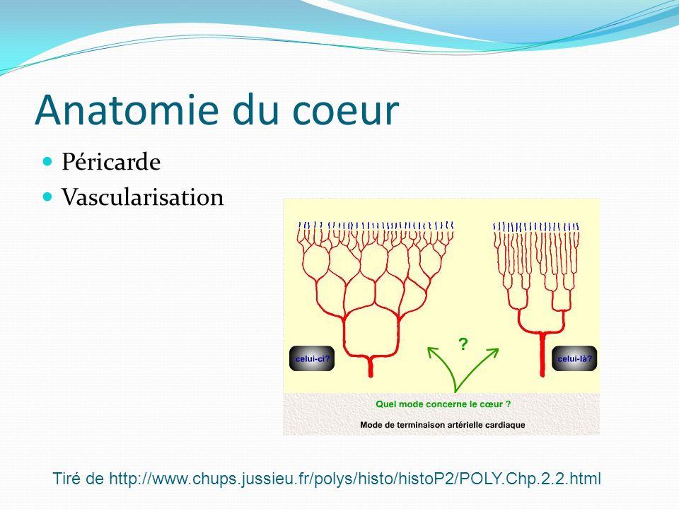 Anatomie du coeur Péricarde Vascularisation Tiré de http://www.chups.jussieu.fr/polys/histo/histoP2/POLY.Chp.2.2.html